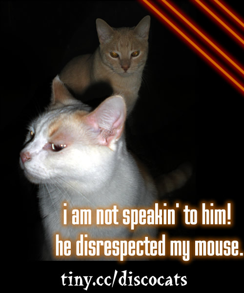 Funny Mad Cat Pics With Captions | www.pixshark.com ...